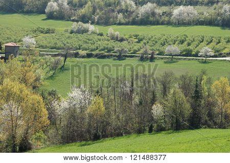 Langhe landscape