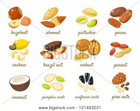 Cartoon Nuts Set - Hazelnut, Almond, Pistachio, Pecan, Cashew, Brazil Nut, Walnut, Peanut, Coconut,