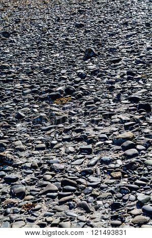 Black Rocks On Sea Bed At Low Tide