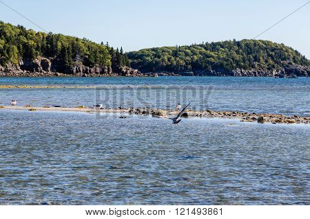 Gulls On Sandbar At Low Tide