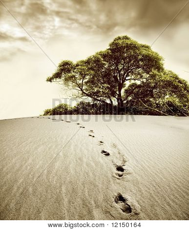 footprint in the desert and a tree