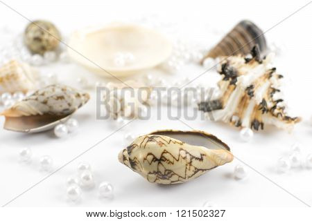 pearl beads and seashells