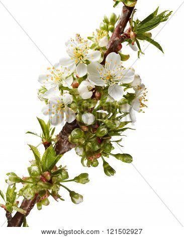 Fruit Tree Brunch At Spring