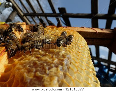 bees on honeycomb