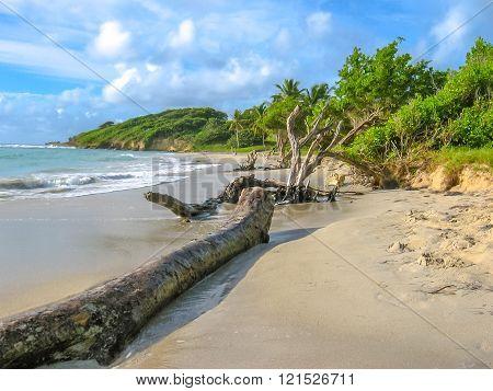 Wild coasts of the Caribbean