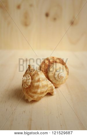 Conch Shell On A Background Of Wooden.