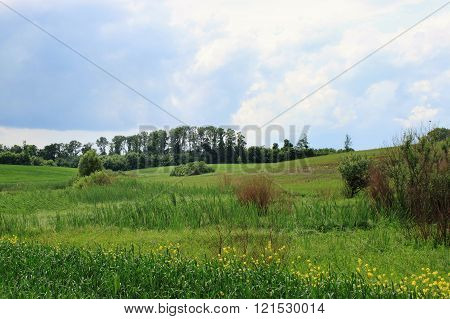 Green field with clouds