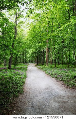 road in spring wood