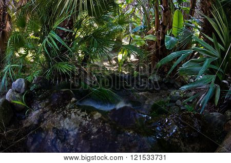 Water stream flowing inside tropical garden at Cagliary, Sardinia