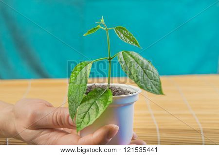 Female Hand Holding Green Sprout. Earth Day