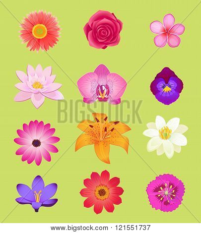 Flower Color Set Design Flat Isolated