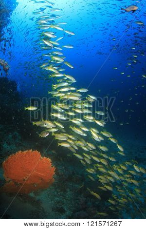 School of yellow snapper fish on underwater ocean coral reef