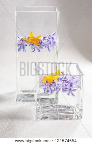hyacinth and crocus flowers in a vase