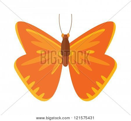 Colored cartoon butterfly vector isolated on white background.