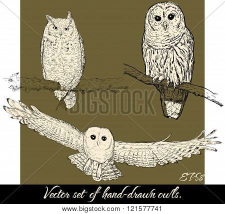 Set of isolated hand-drawn owls 2.