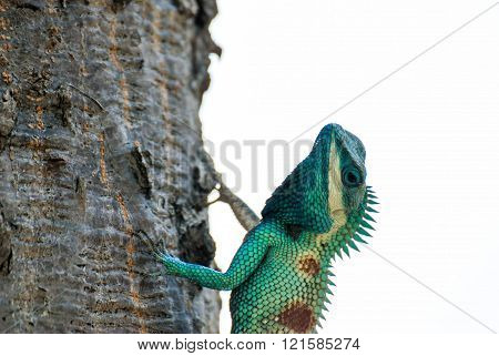 image of green chameleon on a tree close-up