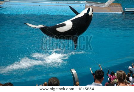 Whale Performance
