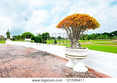 Landscape view of Orange bonsai in park