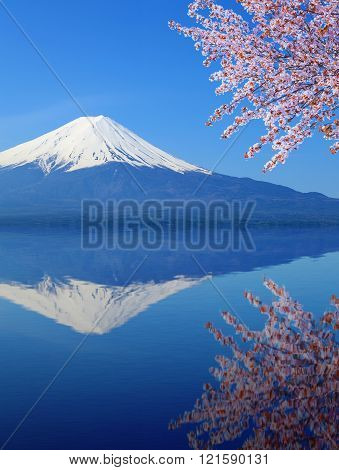 peak of Mount Fuji with Cherry Blossom with water reflection, view from Lake Kawaguchiko, Japan