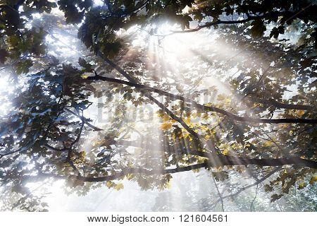 Sunlight Coming Throught Treetop