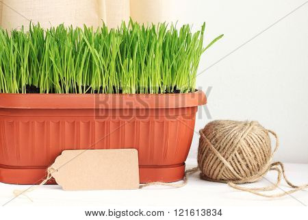 Home gardening.