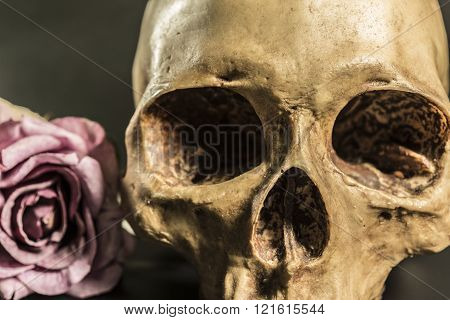 Still Life Human Skull With Roses Over Dark Background