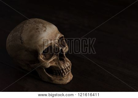 Still Life Photography With Skull