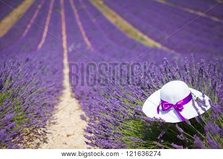 Lavender with hat in Provence