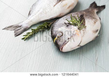 Fresh dorado fish on cutting board healthy food. Copy space