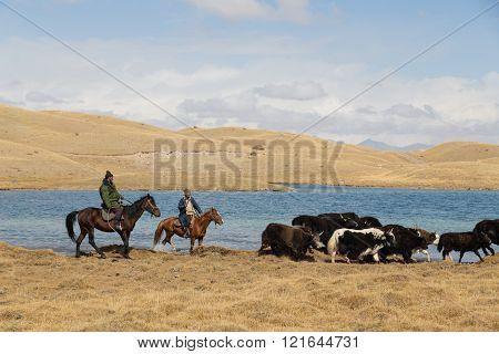 Lake Tulpar, Kyrgyzstan - October 07, 2014: Photograph of yak shepherds on horses.
