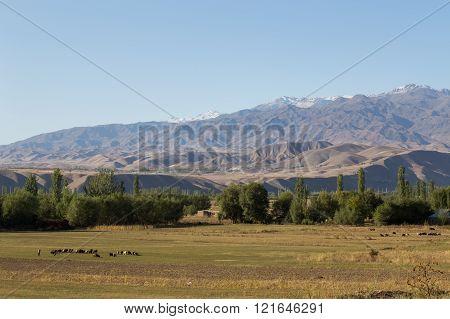 Grazing sheep and beautiful landscape in Kyrgyzstan