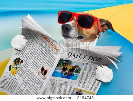 Dog Newspaper Reading