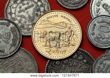 Coins of Nepal. Farmer ploughing with water buffalos depicted in the Nepalese two rupee coin.