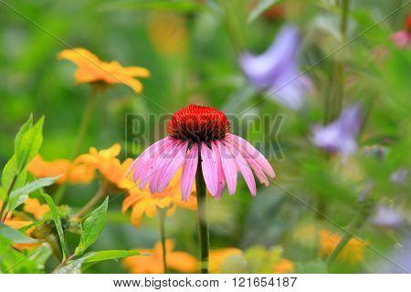Close up shot of daisy flower