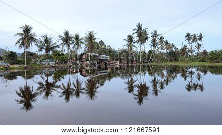 Tropical country side village with palm trees reflection