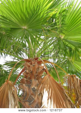 Palm Tree Close Up