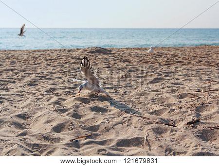 Seagulls picks up food on an empty beach. Animals