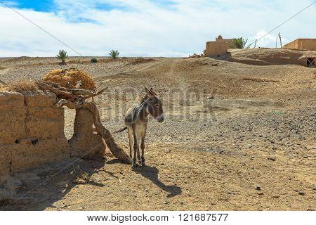 Donkey in Sahara Desert, Morocco,