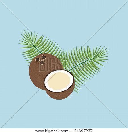 Coconut  Fruit Icon