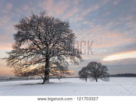 Snow Dusk Trees