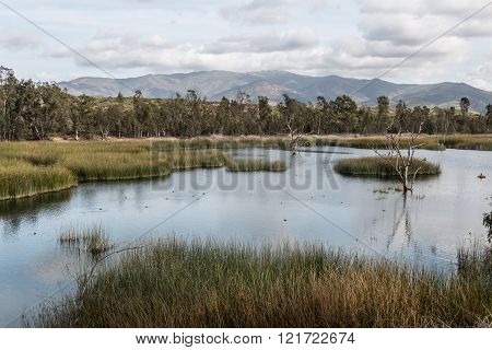 Otay Lakes County Park with Marsh Grass in Lake and Mountains