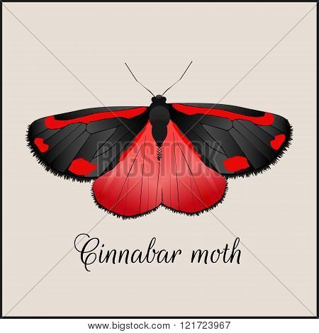 Vintage card with butterfly. Minimal flat vector illustration. Cinnabar moth. Lettering handwriting