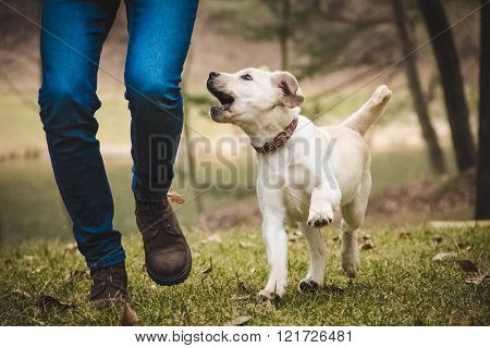 Boy Playing With Labrador