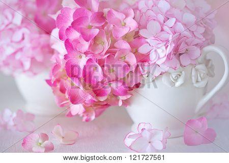 Beautiful pink hydrangea flowers.