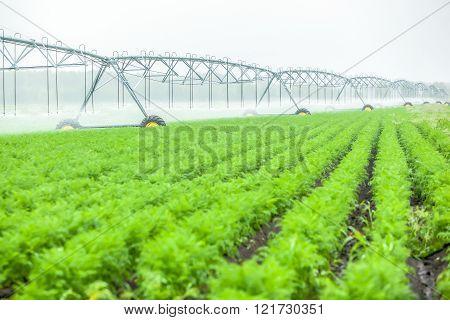 Blurred green field landscape