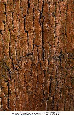 Old Bark Wood Cracked Texture With Lichen
