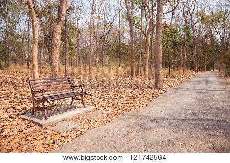 Vintage Bench And Walkway At The Autumn Park In Nobody Day