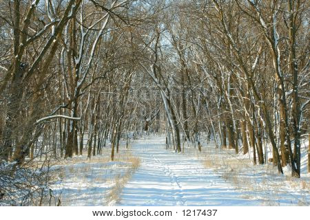 Snowy Path In Woods