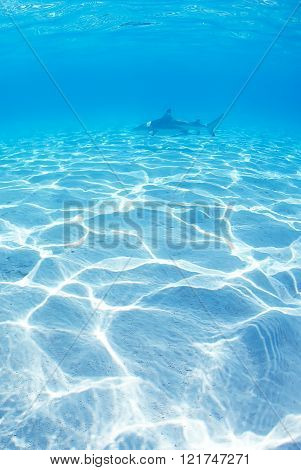 Shark Patrolling In The Shallow Waters Vertical Image