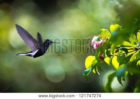 Tiny Hummingbird Over Green Background